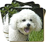 4x Bichon Frise Dog Picture Coasters Gift Set, Ref:AD-BF2C