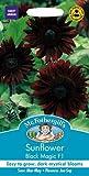 Mr Fothergills Pictorial Packet Flower Sunflower Black Magic F1 20 Seeds