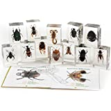 Geo World Bugs World Collection of 12 Real Insects