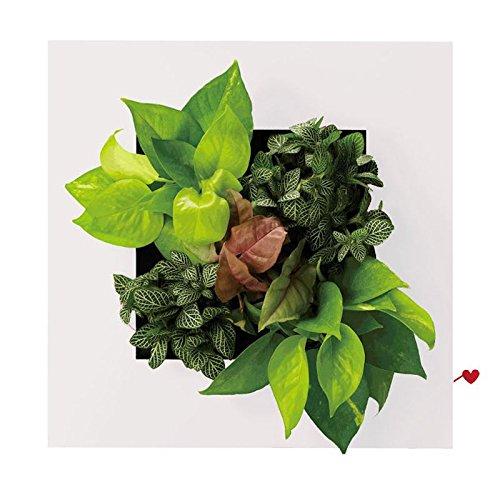 Impression Floral Flower Frame Vase Interior Design Desktop Wall Home Decor W/ 5 Plant Pots Xmas Gift (White)