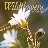 Wildflowers of Canada Wall Calendar 2015