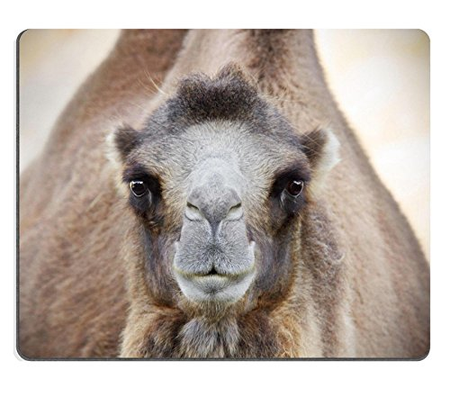 Luxlady Gaming Mousepad IMAGE ID: 32327806 Portrait of a Bactrian camel Camelus bactrianus looking at camera
