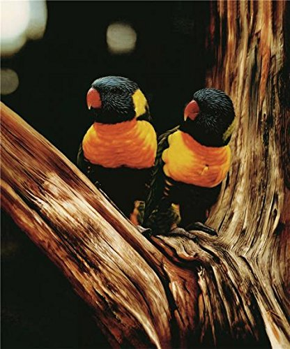 Oil Painting 'Two Birds', 8 x 10 inch / 20 x 24 cm , on High Definition HD canvas prints is for Gifts And Hallway, Kitchen And Laundry Room Decoration, rolled (Spy Oasis Sunglasses compare prices)