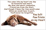 Chocolate Brown Labrador Dog Fridge Magnet Lab Gift - Pet loss bereavement Paw Prints on my Heart Gift