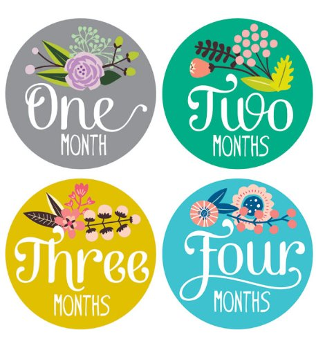 Lucy Darling Shop Monthly Baby Sticker - Baby Girl - Floral Hand Lettering - Months 1-12