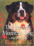 The Bernese Mountain Dog: A Dog of Destiny