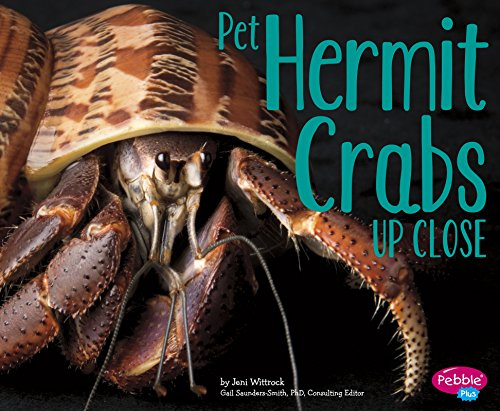 Pet Hermit Crabs Up Close (Pets Up Close)