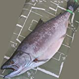 魚水島 「厳選本仕込」天然サクラマス春風干し 3kg物