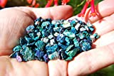 250 (TWO HUNDRED FIFTY) AAA Grade CHARGED 500cts TINY BABY PEACOCK ORE Chalcopyrite Crystals Healing Energy [Perfect for Jewelry & Grids] REIKI by ZENERGY GEMS