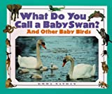 img - for What Do You Call a Baby - Swan? And Other Baby Birds book / textbook / text book