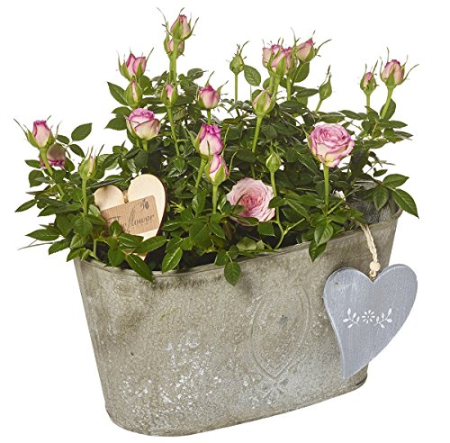 the-flower-rooms-rose-planter