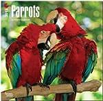 Parrots 18-Month 2015 Calendar