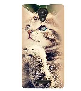 Printvisa Standing Cat Pic Back Case Cover for Xiaomi Redmi 3S::Xiaomi Redmi 3::Xiaomi Redmi 3 (3rd Gen)