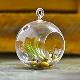 MyGift® 2 Clear Glass Hanging 4.5 Inch Round Ball Air Plant Terrarium Globe / Hanging Votive Candle Holder with Flat Round Base and Loop Ring Hook