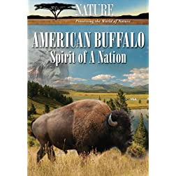 Nature: American Buffalo