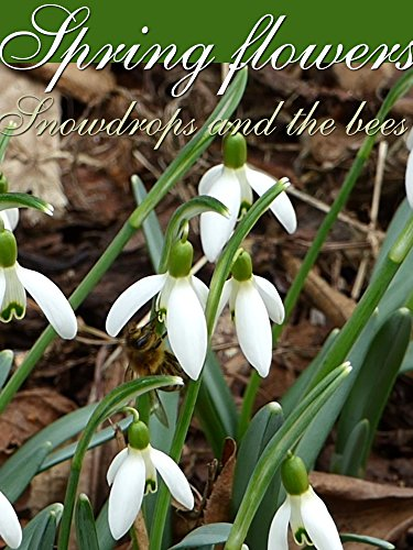 Spring flowers. Snowdrops and the bees on Amazon Prime Instant Video UK