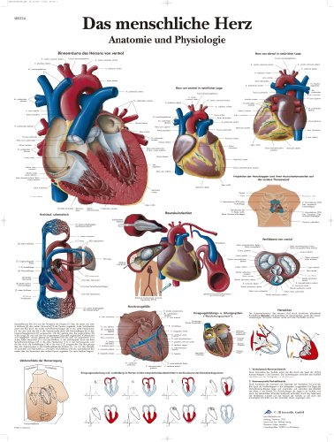 Anatomie für Quizfans