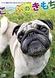 「結婚できない男」のパグ犬・ケンちゃんのDVD 「こつぶのきもち」