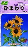 カネコ種苗 草花タネ770 ひまわり 大雪山 10袋セット