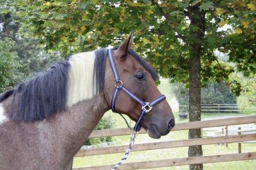 KERBL Halfter Mustang, marine/flieder, Grösse