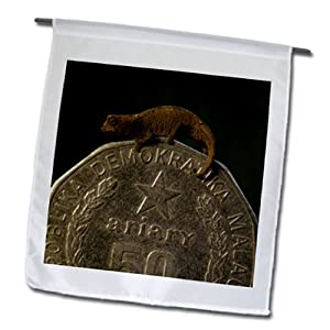 Danita Delimont - Lizards - Thumbnail Chameleon, Lizard, NW Madagascar-AF24 POX0142 - Pete Oxford - 12 x 18 inch Garden Flag (fl_73112_1)