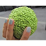30 Osage Orange Seeds (Maclura Pomifera) (Bow Wood, Hedgeapple, Orange, Osage) Family: Moraceae