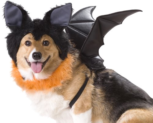 bat costume that could double as dragon