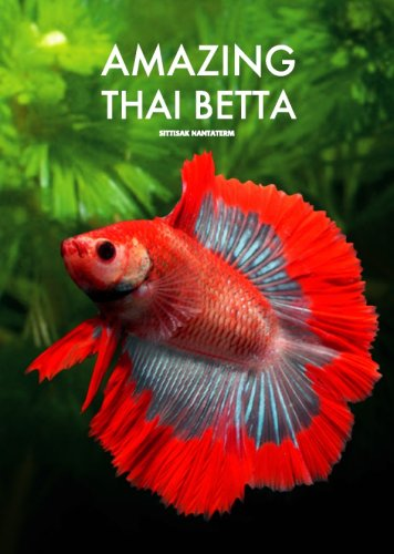 Amazing Thai Betta Sittisak Nantaterm