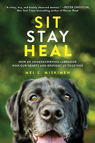 sit-stay-heal-how-an-underachieving-labrador-won-our-hearts-and-brought-us-together