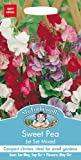 Mr Fothergills - Pictorial Packet - Flower - Sweet Pea Jet Set Mixed - 35 Seeds