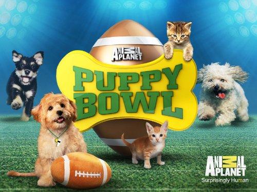 Puppy Bowl Season 1