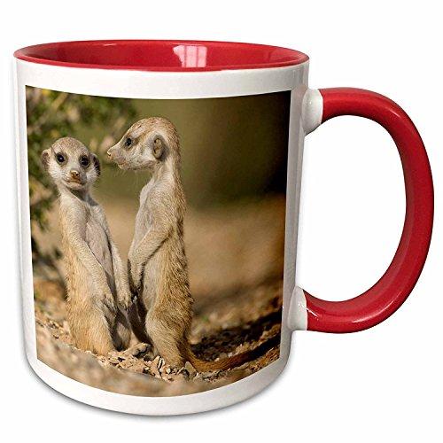 3dRose Namibia, Keetmanshoop, Meerkat, Namib Desert, Mongoose, Ceramic Mug, 11-Oz