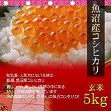 【父の日 プレゼント・カード付】魚沼産コシヒカリ 5kg 玄米・贈答箱入り/ギフトに新潟の最高級ブランド米を