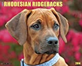 Just Rhodesian Ridgebacks Calendar