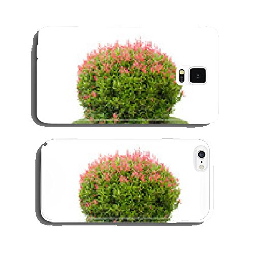 colorful-shrub-of-short-pigeon-berry-tree-isolated-over-white-ba-cell-phone-cover-case-iphone5