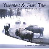 Yellowstone & Grand Teton Wildlife Portfolio