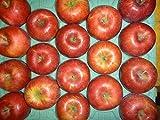 シナノスイート(信州りんご3兄弟) 家庭用 5kg 特別栽培りんご(農薬半減の認証あり)  今秋収穫です。