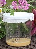Butterfly Larvae Kit