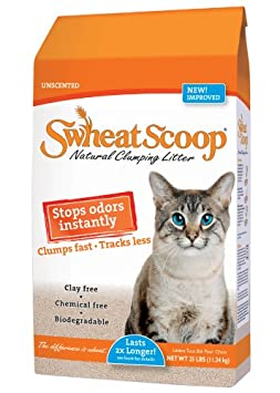 Switching Wet Cat Food Brands