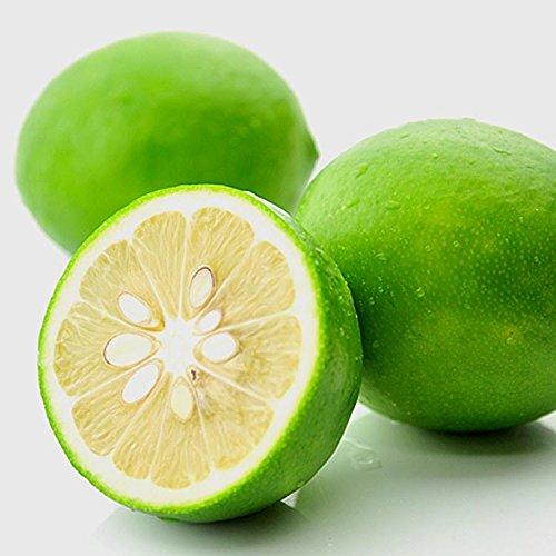 広島 レモン 1kg 有機肥料栽培 防カビ剤不使用 れもん [新物]