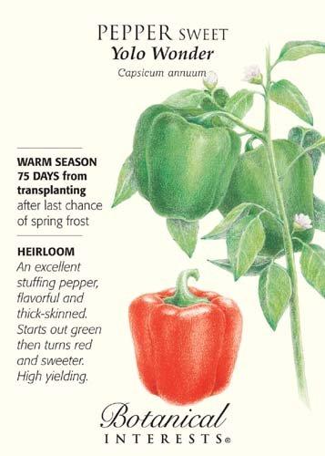 Yolo Wonder Sweet Pepper Seeds - 500 Mg