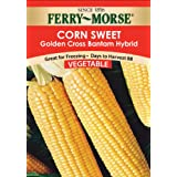 Ferry-Morse 1444 Corn Seeds, Golden X Bantam Hybrid (20 Gram Packet)