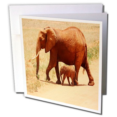 Baby Picture Thank You Cards front-1026306