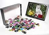Photo Jigsaw Puzzle of Cat - Ragdoll in ...
