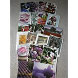 Women's Birthday cards :Flower greetings cards,pack of 6by posies and petals