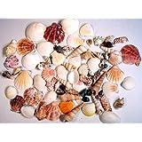"Creative Hobbies® Sea Shells Mixed Beach Seashells - Various Sizes up to 2"" Shells -Bag of Approx. 50 Seashells"