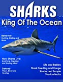 img - for Sharks - King Of The Ocean book / textbook / text book