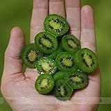 (Kiwiberry *Ambizu*) Heirloom Cocktail Miniature Kiwi Kiwiberry Berry Hardy Actinidia Arguta Fruit Seeds, Professional Pack, 30 Seeds