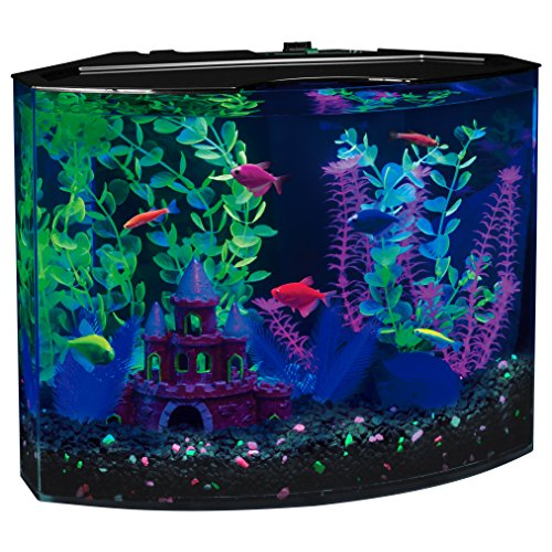 GloFish 29045 Aquarium Kit with Blue LED light, 5-Gallon (5 Gallon Fish Tank Starter Kit compare prices)