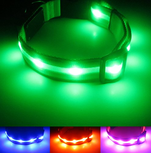 Blazin Safety Led Dog Collar Usb Rechargeable With
